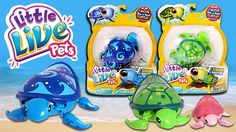 Little Live Pets Lil' Turtle Toy Unboxing and Review | Kids Play O'Clock