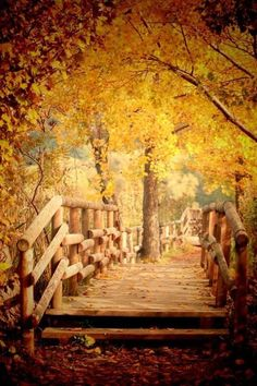 tree-walkway
