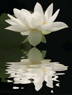 Resultado de imagem para flor de lótus gif