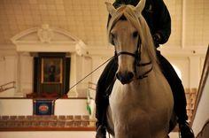 Show How The Andalusian Horses Dance Horses Horse Dance Black Horses