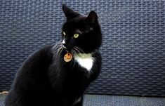 Our beautiful cat wearing an ID tag Pet Id Tags, Your Pet, Etsy Seller, Cats, Animals, Life, Beautiful, Gatos, Animales