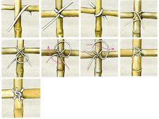 Bambus binden