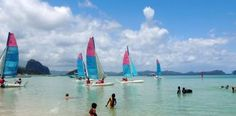 Sail arround the islands in Philippines. Beginers, experienced-sailor, a must-to-do to discover the bay on your own pace, or just learn something new during your holidays. Boat Rental, Palawan, Philippines, Sailing, Island, Block Island, Islands, Boating