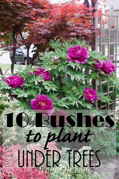 10 Bushes To Plant Under Trees | www.fromh2h.com
