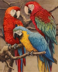 parrot painting on old postcard