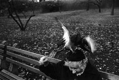 What you get for feeding pigeons | Richard Kalvar ¦ Great atmosphere, very unusual.