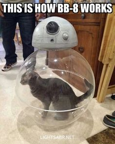 Star Wars The Force Awakens Memes lol Star Wars Film, Star Wars Bb8, Star Wars Meme, Star Wars Rebels, Star Trek, Funny Cats, Funny Animals, Cute Animals, Cats Humor