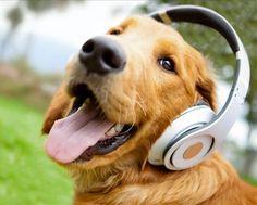 Nada como começar uma segundona com ao som de uma boa música.