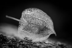 Fragile by Pascaline Michon on 500px