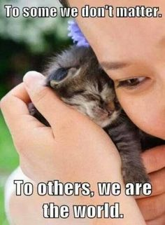 Share this if you believe cats matter. Share your kitty with us @ Cat Lovers Only Little Kittens, Kittens Cutest, Cats And Kittens, Cute Cats, Funny Cats, Fluffy Kittens, Baby Kittens, Tiny Kitten, Animals And Pets