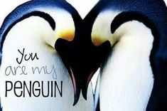 dear prince charming, from me to you . Penguin Love Quotes, Penguin Facts, Penguin Pictures, Animal Pictures, Love Notes To Your Boyfriend, Penguin World, Best Friend Soul Mate, All About Penguins, Penguin Tattoo