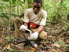 Next big idea in forest conservation? Connecting deforestation to disease