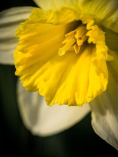 Garden Gold by Painted Light Studio (hardpan photo), via Flickr
