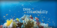 Dive Colourfully - Great Barrier Reef.