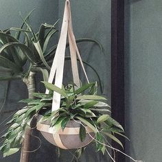 From tumbling ferns to a sprawling blossom, a plant hanger can bring life to any room. An indoor plant centrepiece. Available in different sizing in store. Recycled Timber Furniture, Plant Centerpieces, Patio Windows, Window Boxes, General Store, Plant Hanger, Indoor Plants, Recycling, Canning