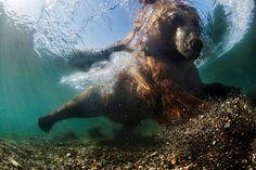 Galeria - As melhores fotografias subaquáticas - Artes - DN