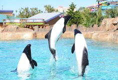 The Commerson's Dolphin looks like a mix between a dolphin and a killer whale. Not until I went to Sea World did I even know these cuties exist.