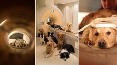 How Dogs Read Our Moods: Emotion Detector Found In Fido's Brain -- NPR