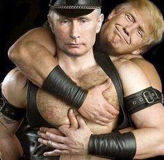 Russian bear gay