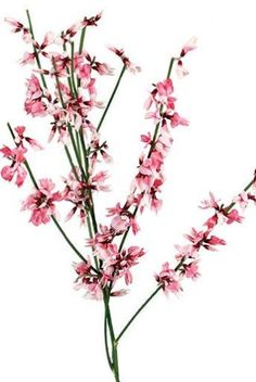Points You Should Know Prior To Obtaining Bouquets Pink Genista - Available For Scottish Brides In February. Contact The Stockbridge Flower Company For More Details.