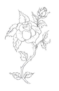 Rose Drawings In Pencil | rose tattoo pencil by *tobilou on deviantART