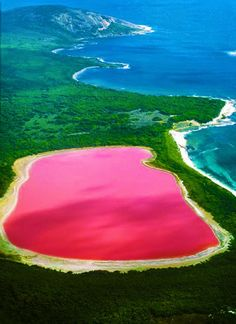 "Lake Hillier (the ""Pink Lake""), Western Australia / More reason to want to visit Australia, I mean really how cool is this. Places Around The World, Oh The Places You'll Go, Travel Around The World, Cool Places To Visit, Places To Travel, Travel Destinations, Western Australia, Australia Travel, Perth Australia"