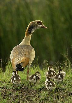 Mom & Babies