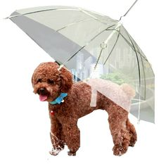 Transparent Umbrella with Built-in Leash Pet Dog Puppy Dry Comfortable In Rain -- Check out this great product. (This is an affiliate link) #DogsApparel