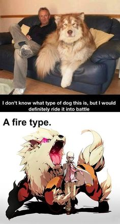 I don't know what type of dog this is, but I would definitely ride it into battle. A fire type. Pokemon