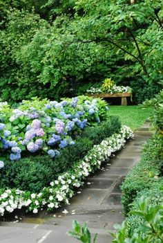 Planting arrangement along the left side of driveway! Hydrangeas and Rodos, boxwoods in front and low-lying groundcover or blooms in front of it all. Serenity in the Garden: No-Fail Tips for Turning Hydrangeas Blue!