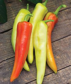 I'll need to grow some of these for A's hot sauce