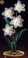 """Képtalálat a következőre: """"kwiaty z rajstop"""""""