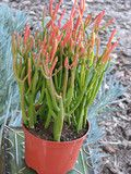 Premium quality succulent and cactus plants, gifts, dish gardens, wedding favors, desert gardens,