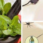 Hoduj tę roślinę w domu, a już nigdy nie zobaczysz w nim myszy, pająków i innych owadów   Szkolenia dietetyczne Teak, Life Hacks, Plant Leaves, Vegetables, Plants, Asia, Organization, Box, Style