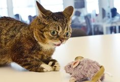 Tell bullies who's boss with confidence. Bullies can smell weakness. | Lil Bub's 17 Tips For Your First Day Back At School