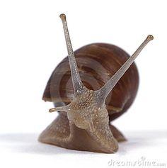 Edible snails by Tomasz Kopalski, via Dreamstime