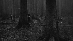 WATCHING YOU IN THE WOODS....