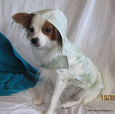 Custom Small Dog Raincoat - Lite Green Floral Dog Raincoat, Hook And Loop Tape, Texas Usa, Dog Sweaters, Small Dogs, Making Out, Dachshund, Chihuahua, Puppies
