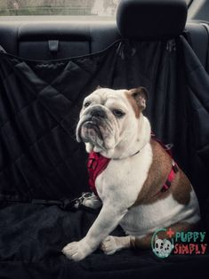 Vehicle owners who like to take their puppies on a trip can greatly benefit from owning high-quality dog seat covers. Tv Set Design, Blog Design, Dog Car Seats, Dog Seat, New Things To Learn, Cool Things To Buy, Amazon Work From Home, Some Love Quotes, Free Facebook Likes