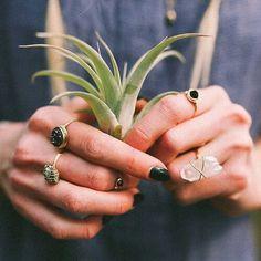 flora + rings