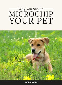 Microchipping your furry friend could actually save his life.