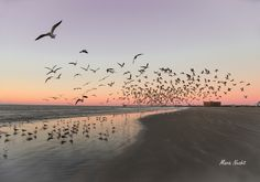 Port Aransas & Mustang Island has the best beaches in Texas that stretch for miles - spots to play, relax, cruise or let the kids run wild in total safety. Best Beaches In Texas, Port Aransas Beach, Mustang Island, Texas Roadtrip, Sandy Beaches, Beach Fun, Cruise, Road Trip, Sunset