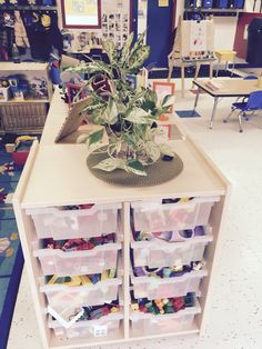 Plants in classrooms!