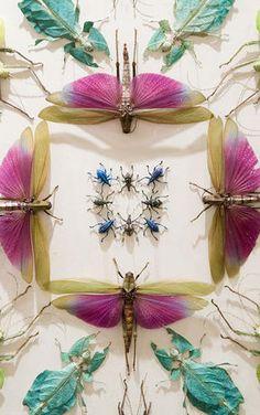 6 | Meet Jennifer Angus, An Artist Whose Medium Is Insects [Slideshow] | Co.Design | business + design