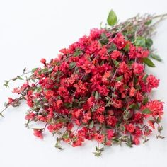 Unique Flowers, Cut Flowers, Beautiful Flowers, Cut Flower Garden, Love Garden, Flower Tower, Flower Food, Ornamental Grasses, Types Of Plants