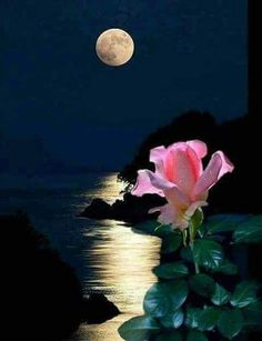 I love the way pink flowers seem to glow in moonlight Moon Photos, Moon Pictures, Pretty Pictures, Beautiful Moon, Beautiful Flowers, Good Night Beautiful, Shoot The Moon, Good Night Moon, Moon Art