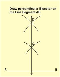 Perpendicular Bisector In Nature