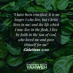 The legal requirement has been fulfilled in Christ! Son Of God, In The Flesh, Christ, Faith, My Love, Life, Loyalty, Believe, Religion