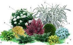 Ornamental Grass Landscape, Evergreen Landscape, Ornamental Grasses, Sun Garden, Shade Garden, Garden Beds, Flower Garden Plans, Flower Garden Design, Creative Landscape