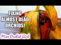 10 ways to (almost) destroy Orchids & how to fix them! - YouTube